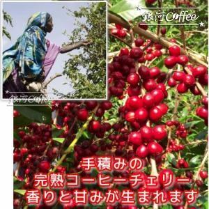 モカ イルガチェフ ナチュラル コーヒーチェリー収穫のイメージ