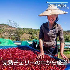 星山コーヒー豆 コーヒーチェリー精選