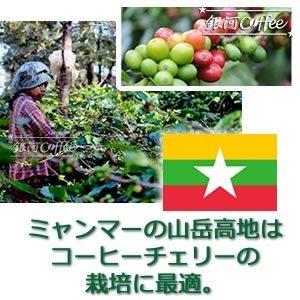 星山コーヒー豆 コーヒーチェリー収穫のイメージ