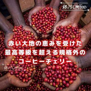 ケニアレッドマウンテン コーヒーチェリー収穫のイメージ