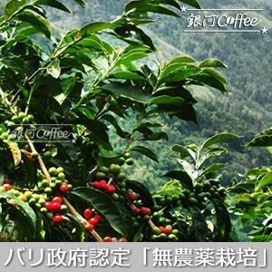 バリ神山ハニー 天日の元コーヒーチェリー