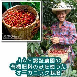 マチュピチュ 天空 コーヒーチェリー収穫のイメージ