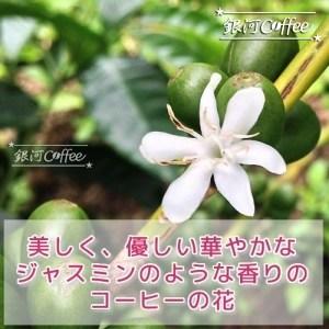 ゲイシャ モカ 花のイメージ
