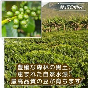 モカ イルガチェフ ウォッシュド コーヒーが育つ環境のイメージ