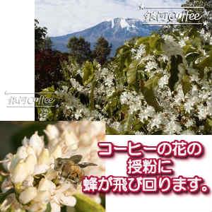 エーデルワイス 花のイメージ