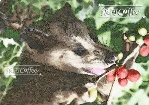 ジャコウネコのイメージ